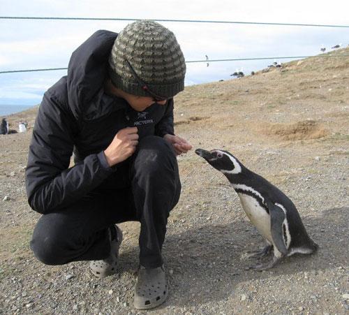sydwpenguin