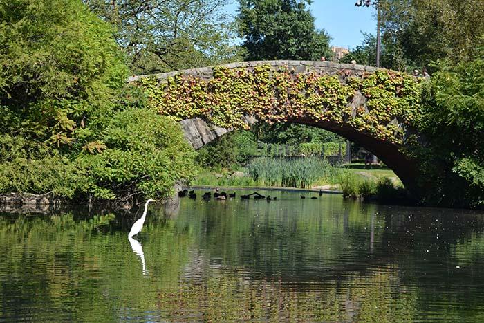 Gapstow Bridge Central Park