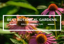 Best Botanical Gardens Dallas