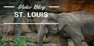 Zoo in St Louis
