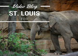 Zoo in St Louis