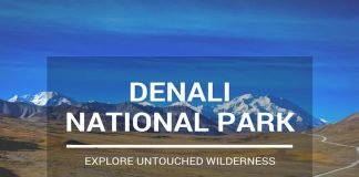 Denali National Park Tour