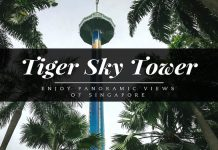 tiger sky tower review