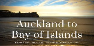 auckland to bay of islands