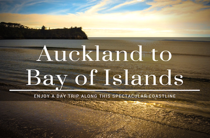 How to Enjoy the Drive from Auckland to Bay of Islands?
