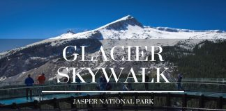 glacier skywalk jasper