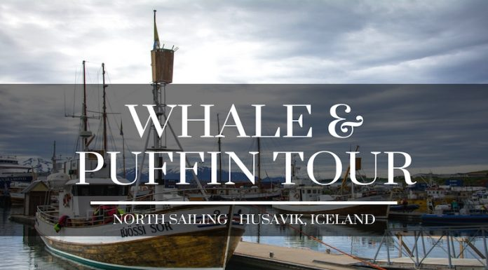Husavik whale and puffin tour