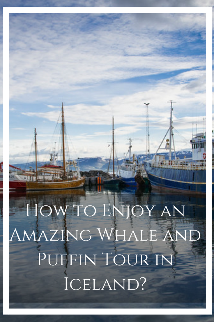 Iceland is home to a plethora of amazing natural attractions but perhaps the best reason to visit the Land of Fire and Ice is to enjoy up close and personal wildlife encounters. #WhaleWatching #Iceland #Puffin