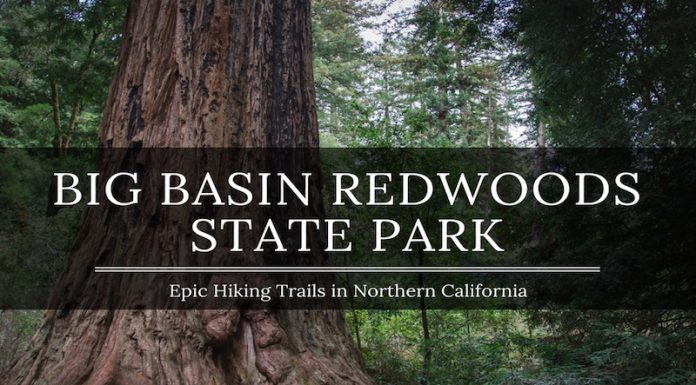 Big Basin Hiking