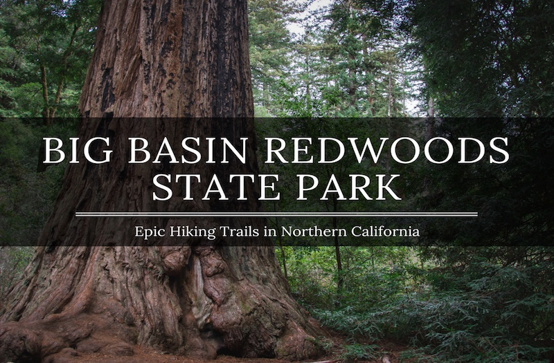 Big Basin Hiking - How to Enjoy an Amazing Redwood Trail