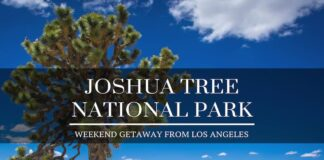 Los Angeles to Joshua Tree National Park